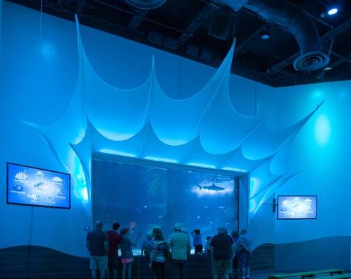 SharkRayBay wall.jpg